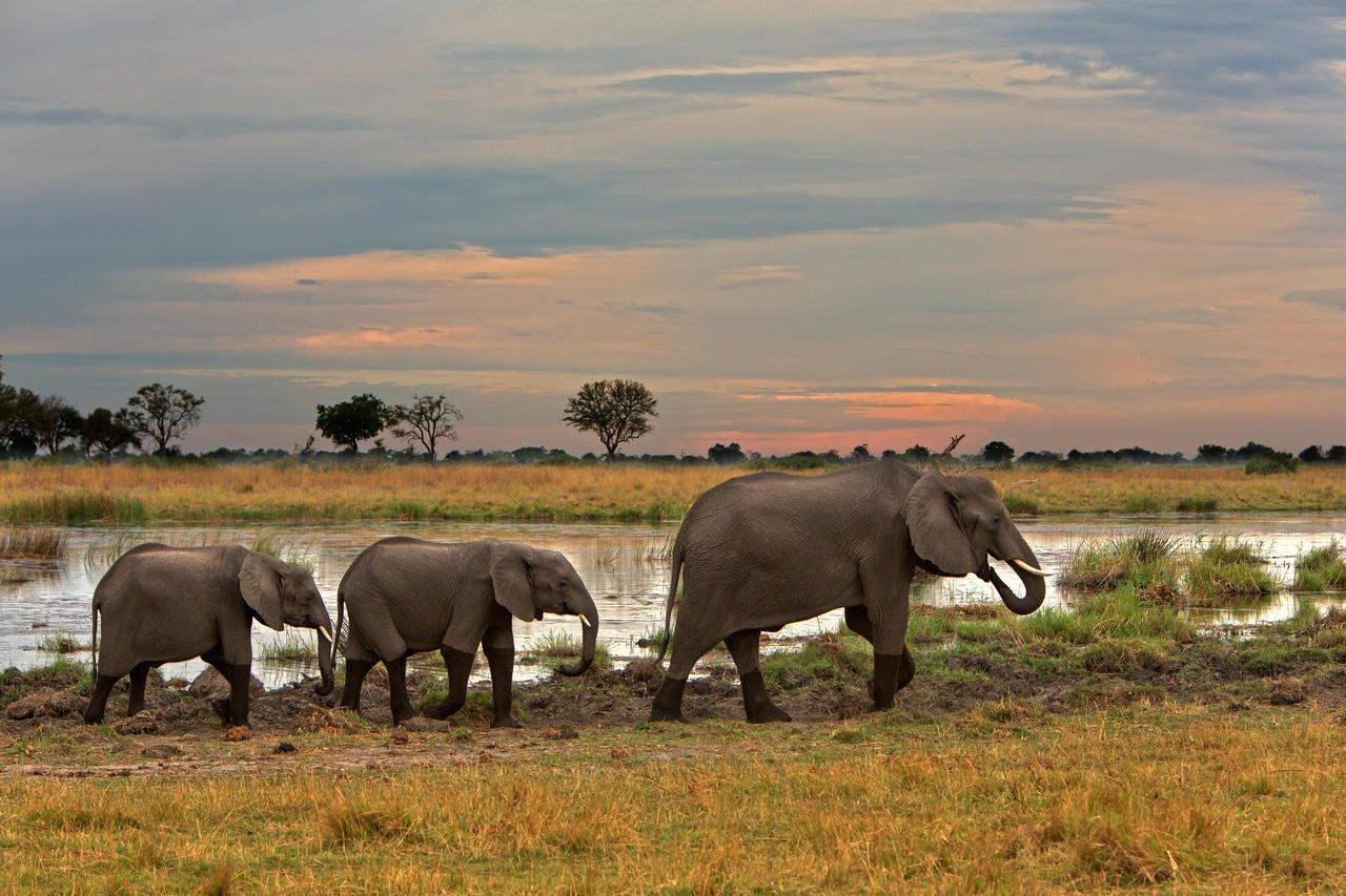 Linyanti Elephants