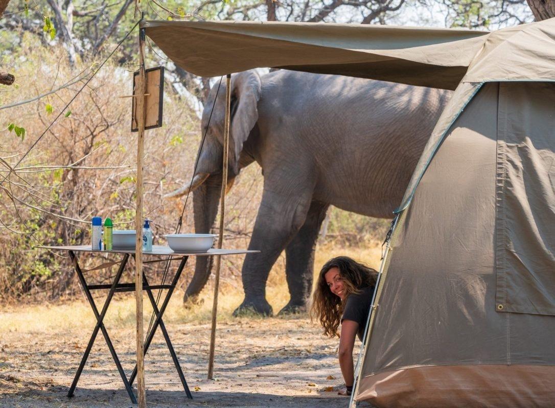 Mobile safari ten and elephant